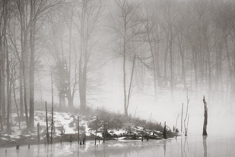 Winter Fog